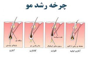 چرخه رشد مو  کلینیک پوست و مو آبنوس مشهد